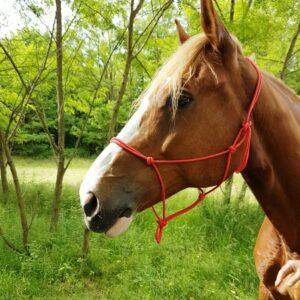 Licol éthologique ou licol en corde, de couleur brun, taille cheval. Les nœuds peuvent être modifiés pour pouvoir l'ajuster à votre cheval, poney, âne. D'autres coloris disponibles : noir, rouge, beige, bleu roi (bientôt disponibles) Le licol éthologique est utilisés pour le travail à pied, l'éthologie et d'autres disciplines, comme l' Equifeel, basées sur le travail de confiance grâce à des exercices ludiques entre monture et cavalier, à pied ou monté. Mise en garde : Ce licol est à utilisé comme outil de travail, il ne faut pas utiliser pour attacher votre cheval ou lui laisser au champ. Le licol éthologique est fabriqué avec un seul bout de corde. Il n'y a aucun point de rupture possible.