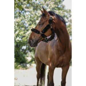 Licol en polypropylène avec boucle d'ajustement et mousqueton, recouvert intégralement de mouton synthétique détachable par bande auto-agrippante, lavable en machine à 30°C. Ce type de licol est souvent présenté comme licol de transport mais vous pouvez l'utiliser tous les jours ! Il offre un confort optimum à votre cheval/poney/âne/mule. Ajustement à la têtière et à la muserolle possibles. Tailles disponibles : Shetland Poney Pur-sang (qui correspond à une taille cob soit double poney) Cheval Coloris possibles : Noir moumoute noire ou écrue Bleu marine moumoute noire ou écru Rouge moumoute noire ou écru Bleu électrique moumoute noire ou écru Chocolat moumoute noire ou écru