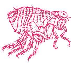 [Chien & Chat]Les différents traitements anti-parasitaires externes